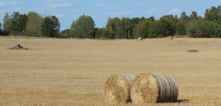 Aktualności - Zaproszenie na forum rolniczo-łowieckie