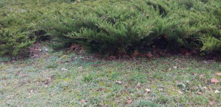 Aktualności - Szukasz krzewów do swojego ogrodu?