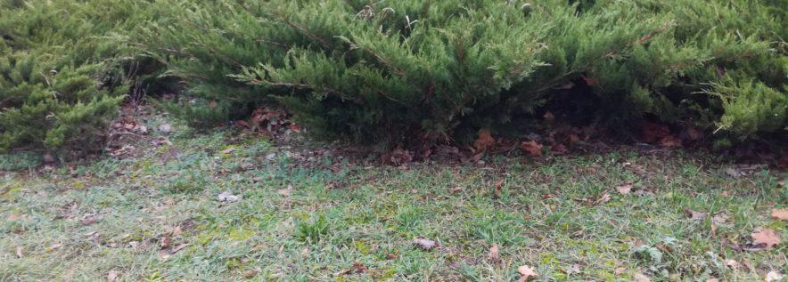 Szukasz krzewów do swojego ogr