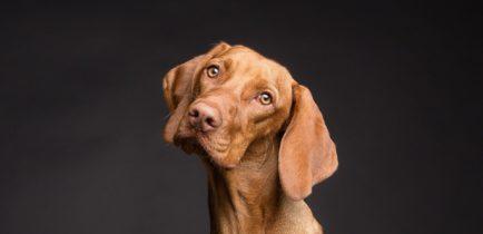 Aktualności - Pies – mój przyjaciel!